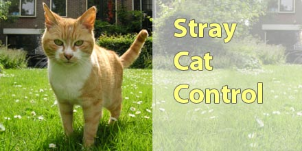 Effective Stray Cat Control